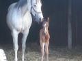 Geboorte Dinky 1